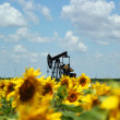 Stock Photo: Oil Field Pump Jack In Sunflowers