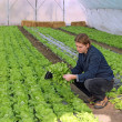 Young Farmer in Greenhouse — Stock fotografie