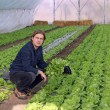 Greenhouse Vegetable Grower — Stock Photo