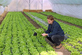 Young Farmer in Greenhouse — Stock Photo