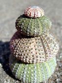 Sea Urchin Pyramid — Stock Photo