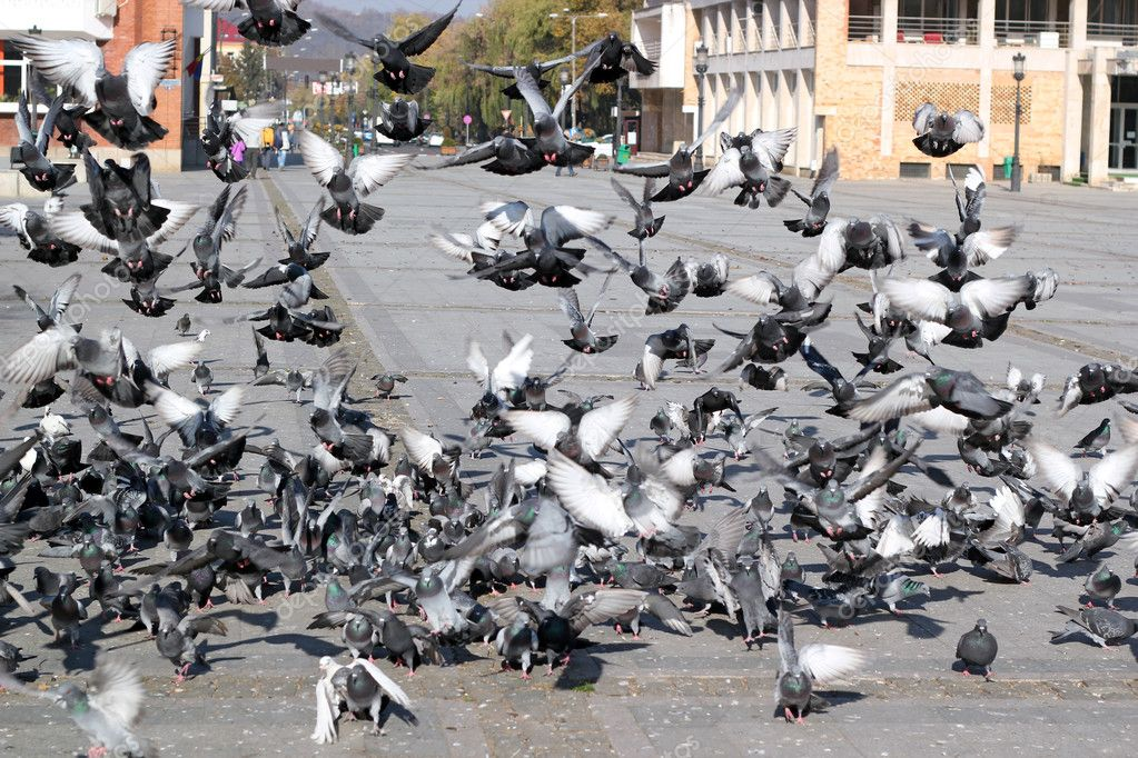 Flock of pigeons in action at the city square. — Stock Photo #9663119