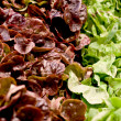 Fresh green and red salad macro on a market — Stok fotoğraf