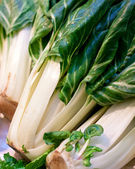 Fresh chard closeup on a market — Stock Photo