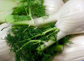 Fresh green fennel closeup — Stock Photo