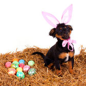 Funny cute easter dog with pink rabbit ears — Stock Photo
