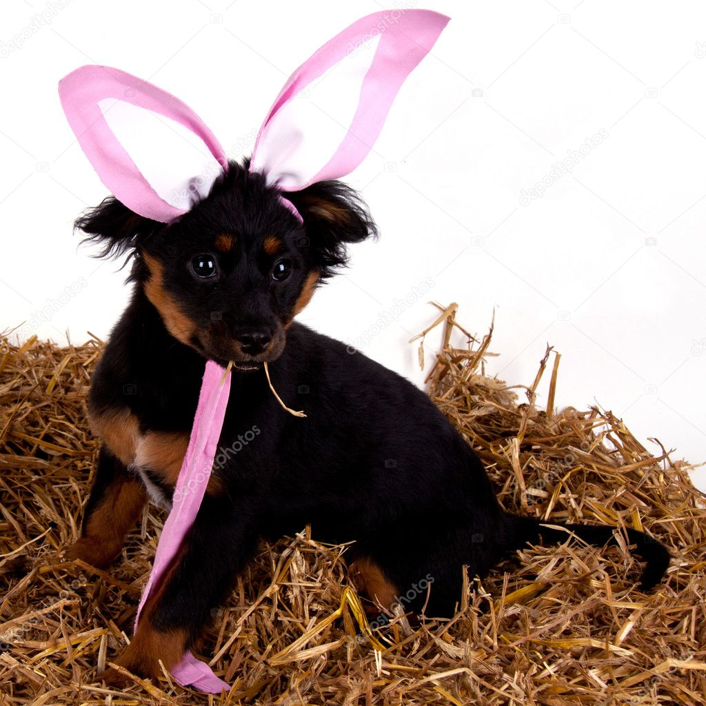 funny easter dog pictures   viewing gallery