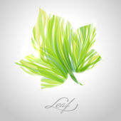 Verde striato lucido maple leaf. illustrazione vettoriale. — Vettoriale Stock