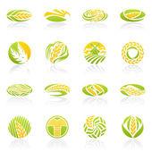 小麦とライ麦。ベクトルのロゴのテンプレートを設定. — ストックベクタ