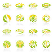 Pšenice a žita. vektorové logo šablona sada. — Stock vektor