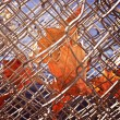 Autumn Fences — Stock Photo