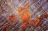 Autumn Fences — Stock Photo