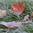 Hoar-frost — Stock Photo