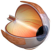 Eye Diagram three quarter view — Stock Photo