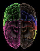 Coloured areas of the Brain, top view — Stock Photo