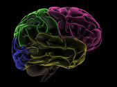 Coloured areas of the Brain, right-side view — Stock Photo