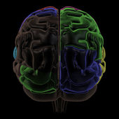 Coloured areas of the Brain, back view — Stock Photo