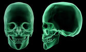 X-ray skeletal structure of the Human Head — Stock Photo
