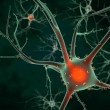 Stock Photo: Cell body of Neuron
