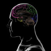 See-through left-side of the head and Brain, without left-hemisphere — Stock Photo