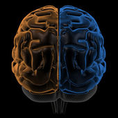 Hemispheres of the brain back view — Stock Photo