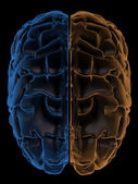 Hemispheres of the brain top view — Stock Photo