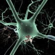 Stock Photo: Cell body of Neuron long-shot