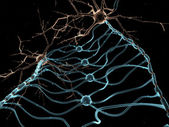 Neuron Oligodendrocytes — Stock Photo