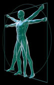 Vitruvian man on black — Stock Photo
