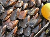 Fresh mussles on a street saler's table — Stock Photo