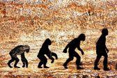 Avolution umano — Foto Stock