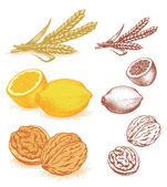 Grain, lemons, walnuts — Stock Vector