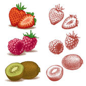 Strawberry, raspberry, kiwi. Vector illustration. — Stock Vector