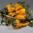 Still life - strange shaped squashes in a basket - Stock Photo