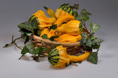 Still life - strange shaped squashes in a basket — Stock Photo