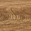 Agriculture background - plowed field - Stock Photo