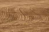 Agriculture background - plowed field — Stock Photo
