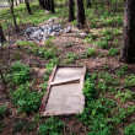 Pine wood polution — Stock Photo