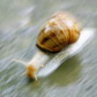 Snail speed - Stock Photo