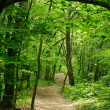 Trail in a green oak forest — Stock Photo