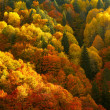 Autumn forest in bright colors — Stock Photo