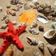 Tropical shells and star-fish — Stock Photo