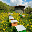 Old house and apiary — Stock Photo