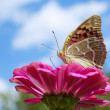 Butterfly — Stock Photo #9148841