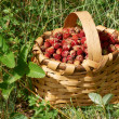 Basked with wild strawberries — Stock Photo