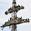 Stock Photo: Cormorant colony