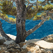 Stock Photo: Mediterranepine in calanque of Cassis, France
