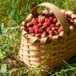 Basked full with ripe wild straberries — Stock Photo