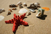 Star-fish and shells — Stock Photo
