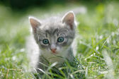Little cat in a green grass — Stock Photo